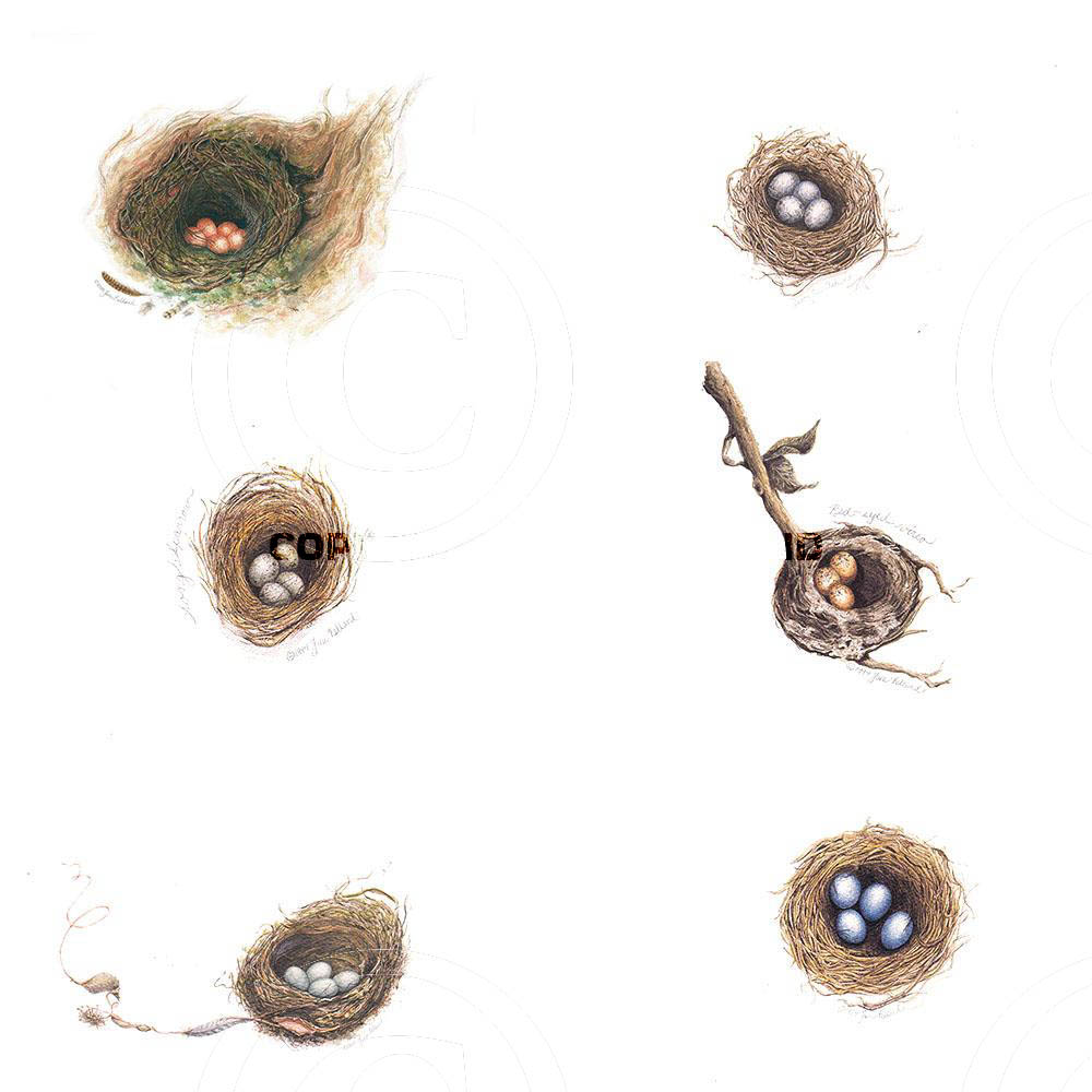 Assorted Bird Nests
